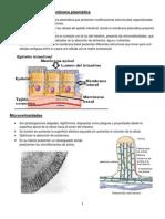 Diferenciaciones de Membrana