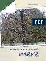 determinator_mere_excerpt.pdf