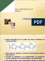 polisacaridos 2