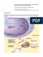 Sintesis de Proteinas_2015