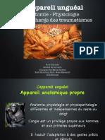 Traumato unguéale 2015-2016
