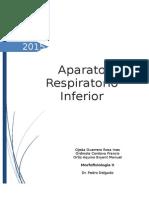 CLASE N 11. Aparato Respiratorio Inferior Tríquea Bronquios y Pulmones.