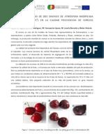 Cerezas-WebRiteca Final (1) (1)