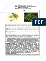 Phlebodium-leucotomos-Calahuala