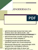 ECHINODERMATA.pdf