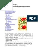 019 El Cultivo Del Granado