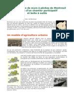 La Restauration Des Murs à Pêches de Montreuil, Récit d'Un Chantier Participatif, Et Boite à Outils