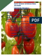 Proyecto de Grado de Tomate