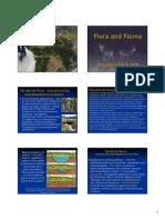 Chapter 19-20A Flora- Fauna
