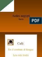 CAF!!!yDENGUE!!!