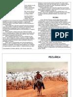 Pecuária e Agricultura