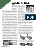 Obesity in rabbits