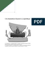 An Alamethicin Channel in a Lipid Bilayer(1)