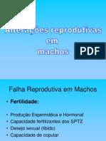 AULA 8 - Patologias Do Sistema Genital Masculino