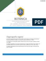 4 BOTÁNICA Morfologia Vegetal Raiz