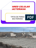 S6.- LA  PARED CELULAR BACTERIANA.ppt