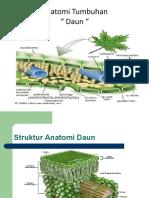 Anatomi Tumbuhan_daun
