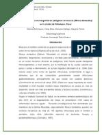 Identificación de Microorganismos en Moscas