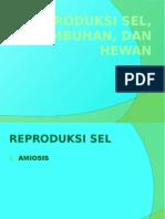 Reproduksi Sel, Hewan, Dan Tumbuhan