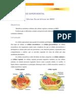 actvidade_exper_1_.professor.pdf