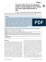 In High-Light-Acclimated Coffee Plants the Metabolic Machinery Is Adjusted to Avoid Oxidative Stress Rather than to Benefit from Extra Light Enhancement in Photosynthetic Yield