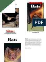 raz lo24 bats