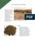 Desechos en el Proceso de Producción de la Caña de Azúcar.docx