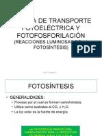 FOTOSÍNTESIS I (TEORIA)