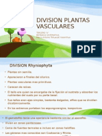 Division Plantas Vasculares By Mark