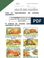 07. La reproducció dels mamífers