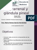 Histología de glándulas Suprarrenal y Pineal