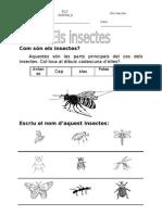 12. Els insectes