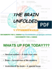 VENTRICLES OF THE BRAIN AND CSF