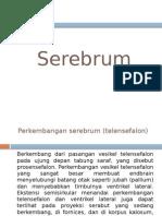 Serebrum