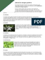 10 Plantes Qui Attirent Les Énergies Positives