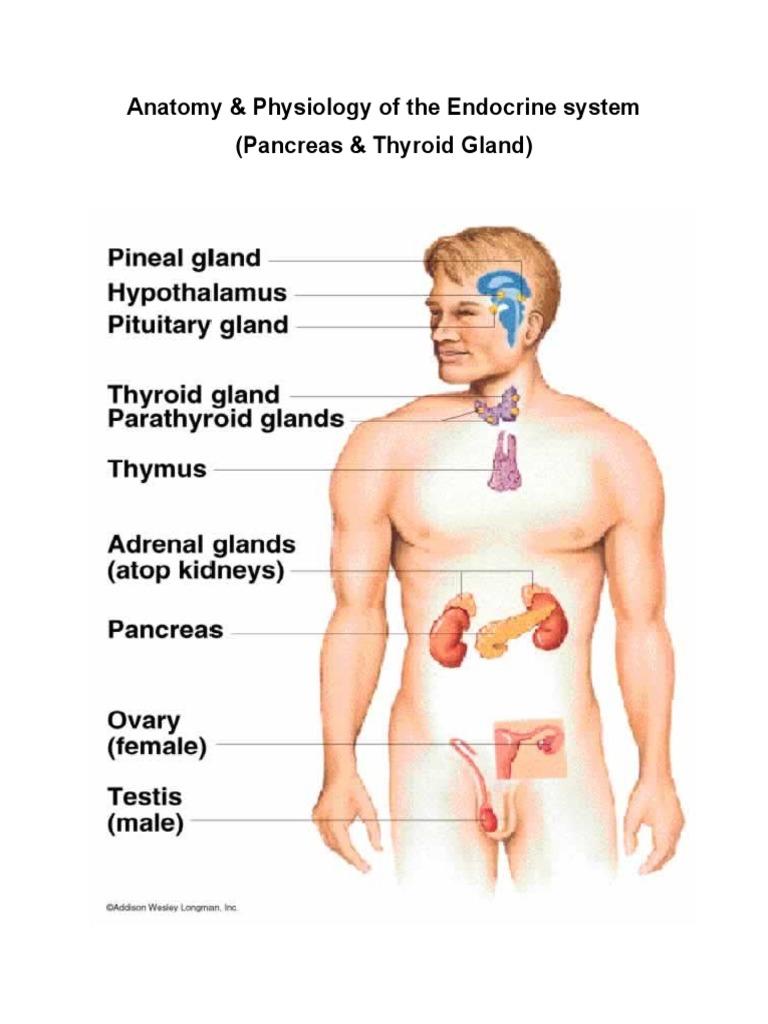 Anatomy & Physiology | Hormone | Pituitary Gland