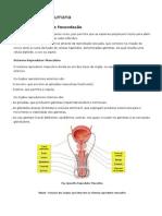 Resumo - Reprodução Humana e Manioulação Da Fertilidade
