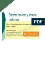 Microsoft PowerPoint - Clases 5 y 6 Sistema Nerv y Sistema Endocrino
