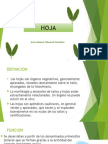 Hoja (Descripcion Botanica)