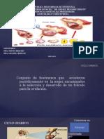 Presentación de Ciclo Ovarico
