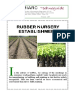 Rubber Nursery Establishment