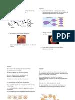 Fases de mitosis y meiosis