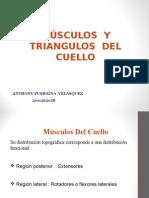 Triangulos y Musculos Del Cuello