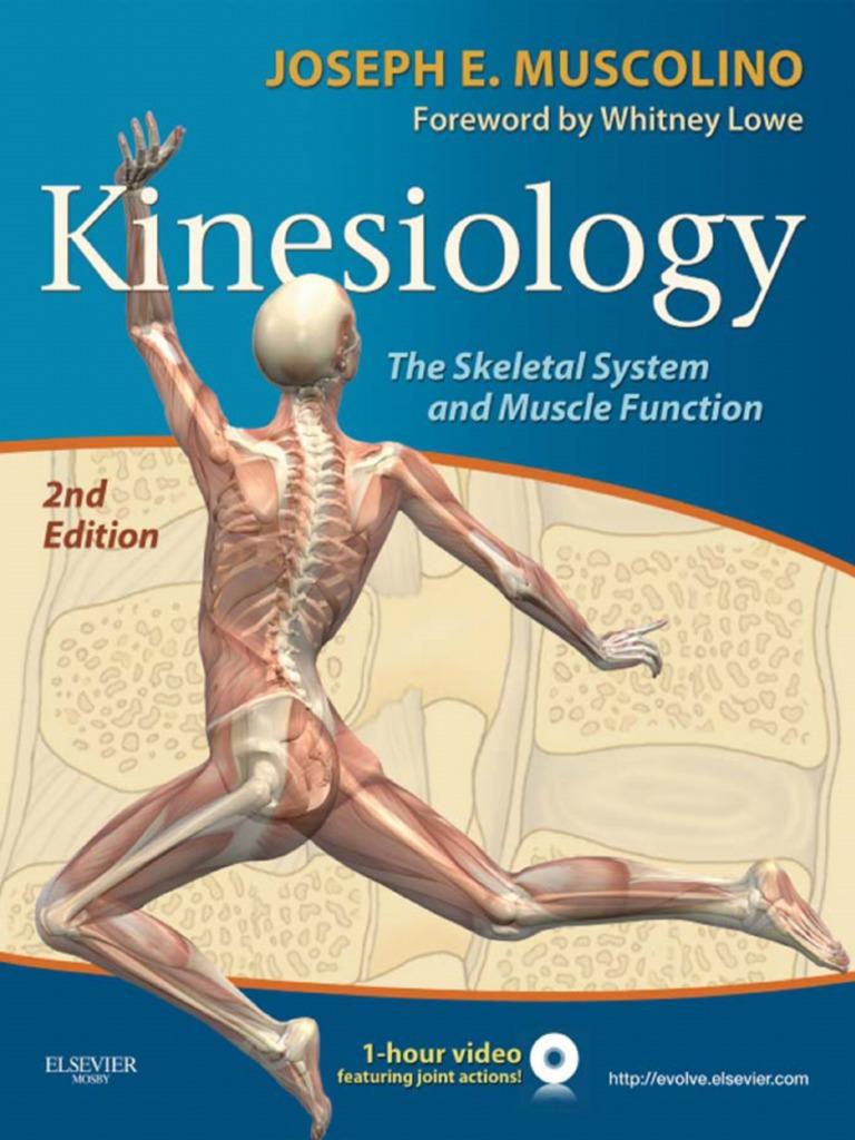 Kinesiology Skeletal System and Muscle Function   Pelvis ...