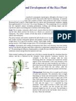 Rice Plant Morphology.pdf