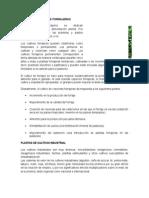CULTIVOS DE PLANTAS FORRAJERAS.docx