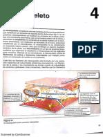 HARVEY CITOESQUELETO.pdf