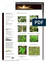 Olodumare_ Hierbas de Oduduwa.pdf