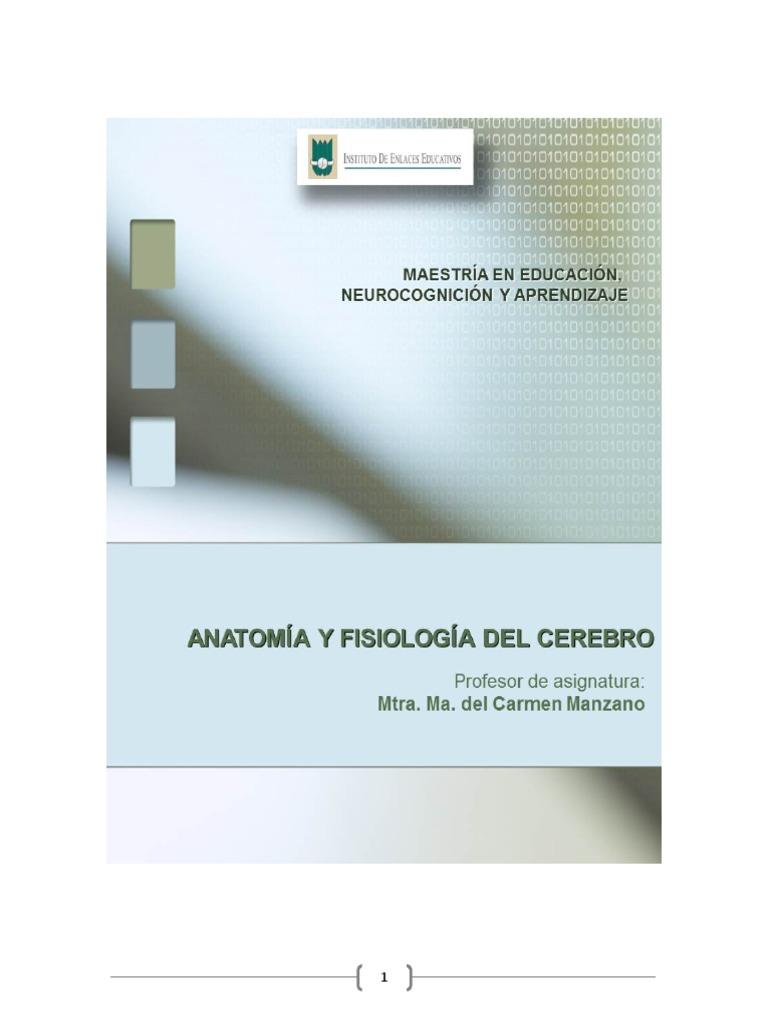 Anatomia y Fisiologia Del Cerebro (1)