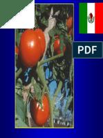 2. Enfermedades Tomate, Dr. Valenzuela y Dr. Garcia